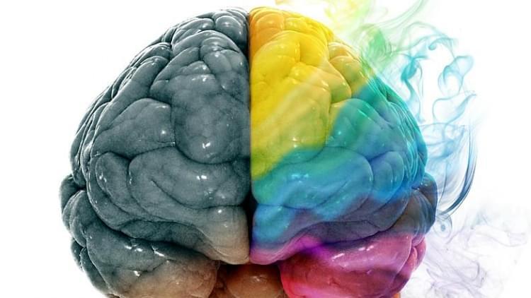 Beyne Dair 11 İlginç Bilgi